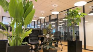 脱毛ピース運営会社ネクストレベルのオフィスに設置している観葉植物たち